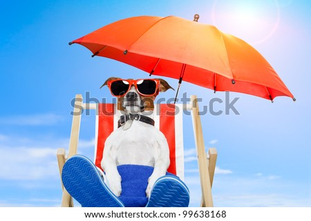 dog sunbathing on a deck chair