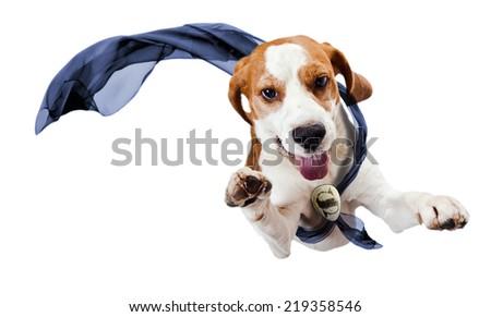 dog - superhero , isolated on a white background - stock photo