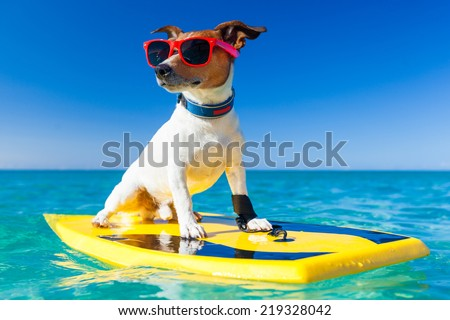 dog surfing on a surfboard wearing sunglasses  at the ocean shore - stock photo