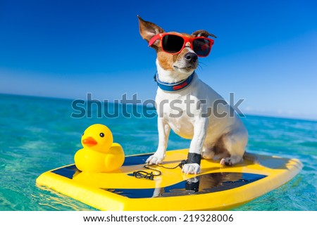 dog surfing on a surfboard wearing sunglasses with a yellow plastic rubber duck, at the ocean shore - stock photo