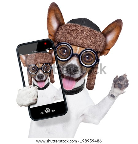 dog taking a selfie  and laughing about that - stock photo