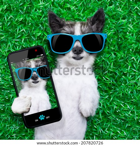 dog taking a selfie while lying on grass meadow in park - stock photo