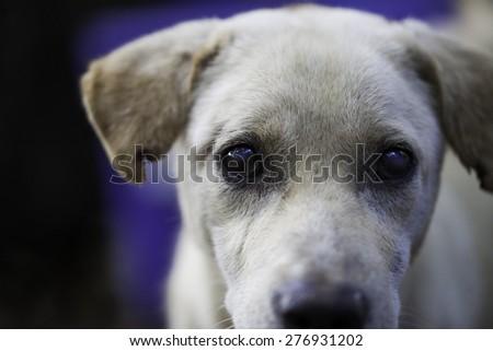 Dog, Thailand - stock photo