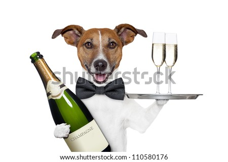 dog toasting new years eve - stock photo