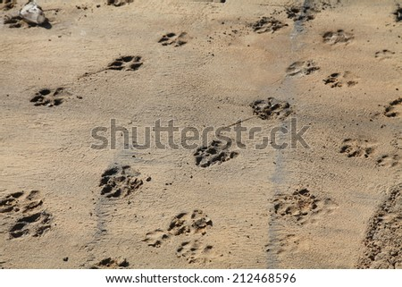 dog traces - stock photo
