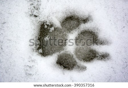Dog track on the snow - stock photo