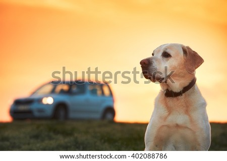 Dog traveler is waiting on the meadow at the sunrise. - stock photo