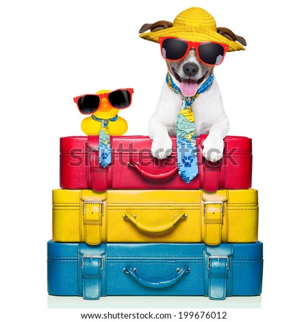 dog traveling with yellow plastic duck on top of luggage stack - stock photo
