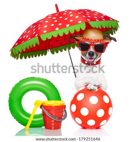 dog under umbrella with red sunglasses and a nice colorful hat - stock photo