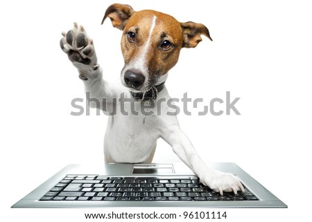 dog using the keyboard on computer and high five - stock photo