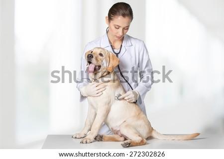 Dog, veterinarian, white. - stock photo