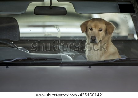 Dog wait owner in car