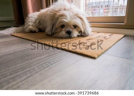Dog waiting at home - stock photo