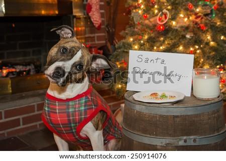Dog Waiting for Santa - stock photo