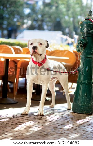 dog waiting the owner outdoors  - stock photo