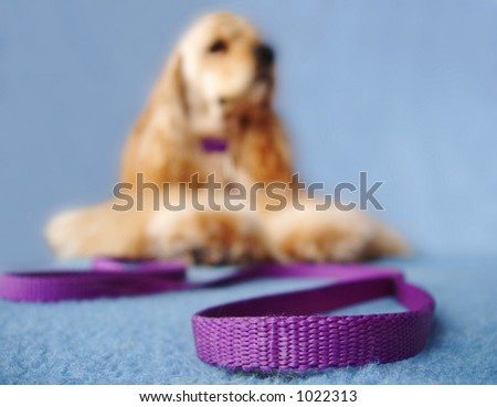 dog waiting to go for a walk - selective focus - stock photo