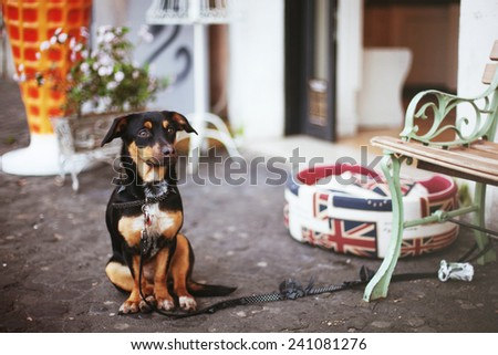 Dog waits for a master at the entrance - stock photo
