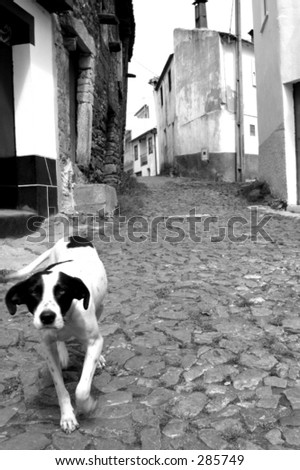 dog walking on an old village from Portugal - stock photo