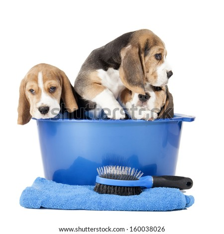 Dog washing in a basin isolated on white background in studio - stock photo