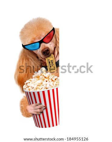 dog watching a movie