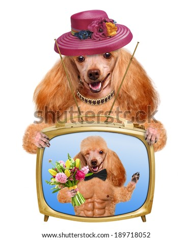 Dog watching television. - stock photo