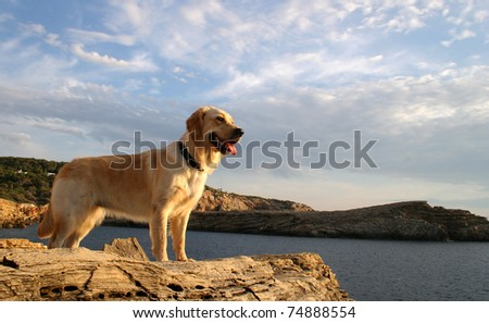 Dog Watching The Mediterranean Sea