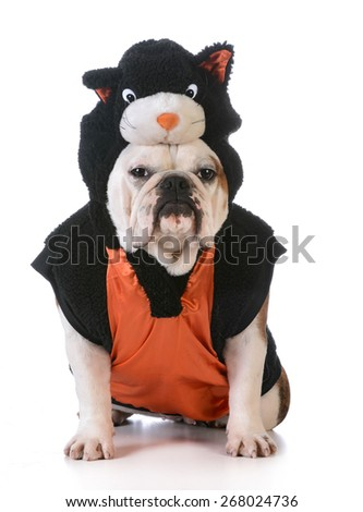 dog wearing cat costume on white background - stock photo