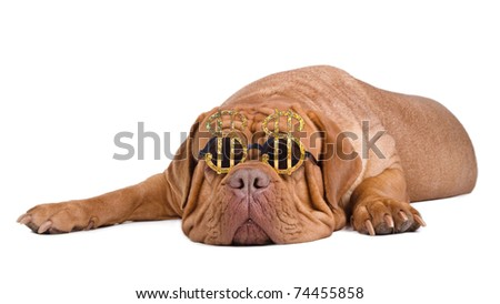Dog wearing funny glasses with dollar currency sign dreaming of becoming rich - stock photo