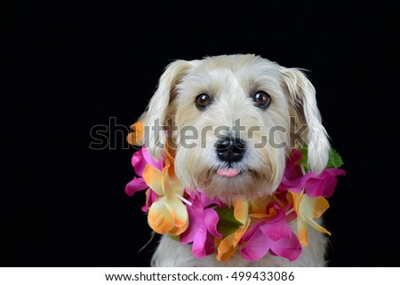 Dog wearing Hawaiian lei