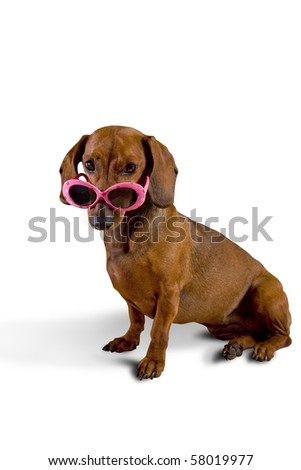 Dog wearing pink sunglasses - stock photo