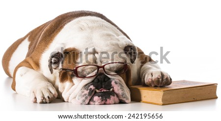 Dog Wearing Reading Glasses Dog Wearing Reading Glasses