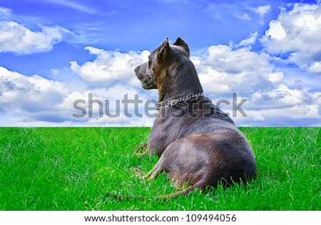 Dog which looks far - stock photo