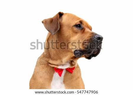 Dog with a bow
