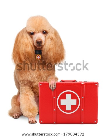 Dog with a first aid kit - stock photo