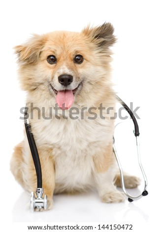 dog with a stethoscope on his neck. isolated on white background