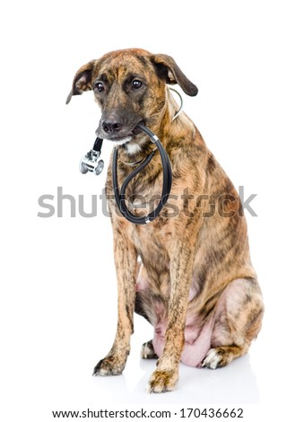 dog with a stethoscope on his neck. isolated on white background - stock photo