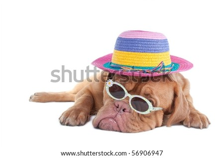 Dog with a summer hat and sunglasses dreaming of seashore - stock photo