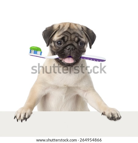 Dog with a toothbrush peeking from behind empty board. isolated on white background - stock photo