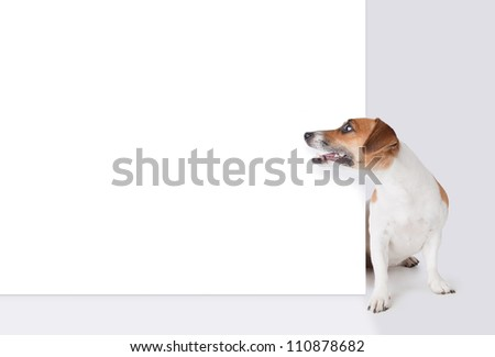 Dog with banner. Jack Russel terrier above white placard. Mockup template for gift certificate - stock photo