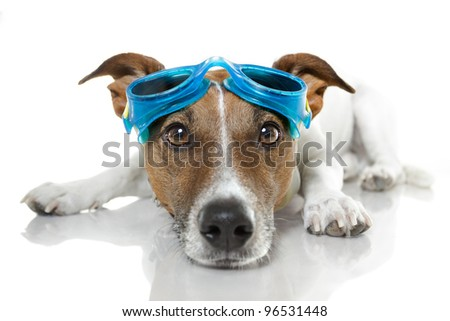Dog with blue goggles - stock photo