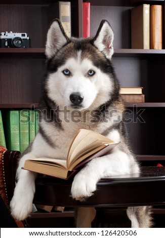 dog with book - stock photo
