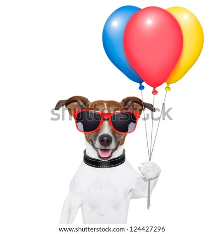 dog  with bunch  of balloons and cotton candy and shades - stock photo