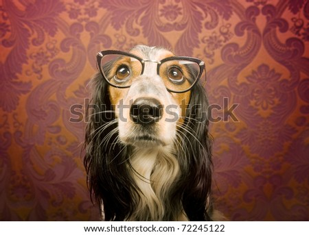 Dog with cat eye glasses looking up - stock photo