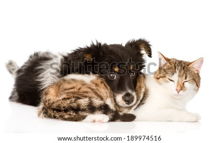 dog with cat together. isolated on white background