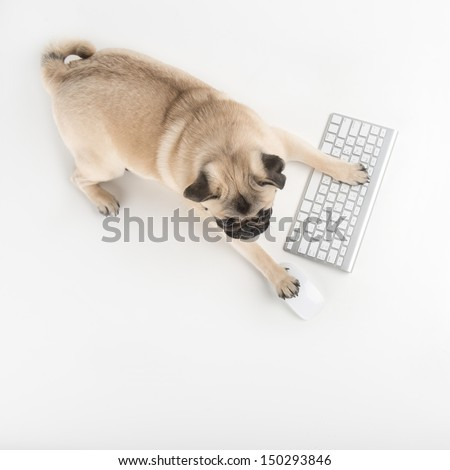 Dog with computer keyboard. Top view of funny dog using computer keyboard and mouse while isolated on white