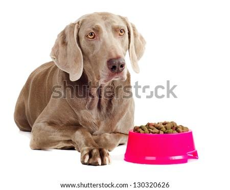 dog with dog food isolated on white background - stock photo