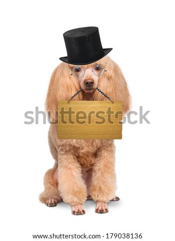 Dog with empty board  - stock photo