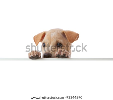 dog with empty board on white background - stock photo