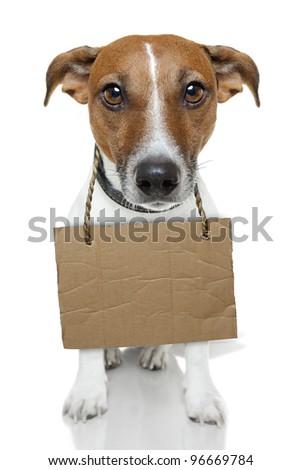 Dog with empty cardboard - stock photo
