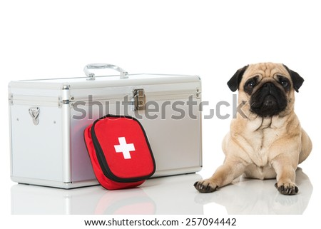 Dog with first aid kit - stock photo
